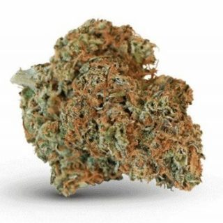 Buy ACDC Weed Strain Online
