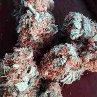 Skunk #1 Marijuana Strain Online