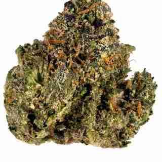 Gelato 45 Marijuana Strain Online
