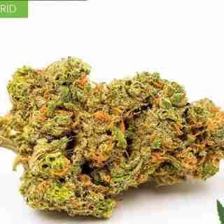 Hybrid Weed Strains