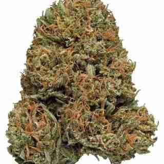 Galactic Jack Marijuana Strain