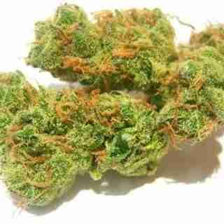 Vortex Marijuana Strain Online