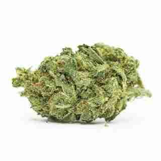 Snow Dog Marijuana Strain