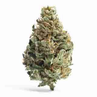 Buy Chocolope Weed Strain Online