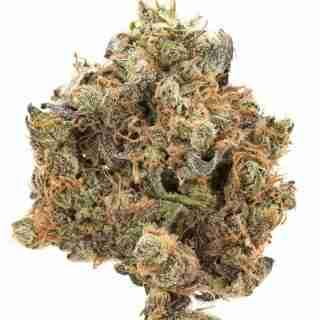 Mr. Nice Guy Marijuana Strain